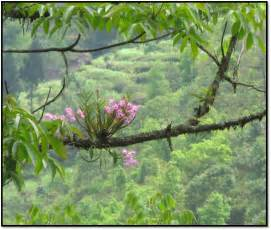 Bamboo In Vase Summer In Sikkim Iv Yuksom Ghumakkar Inspiring