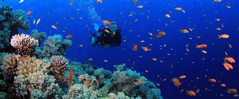 dive raja at liveaboard my adventure indonesia liveaboard homepage