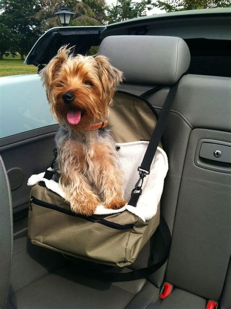 yorkie in car seat my yorkie car seat puppy all you need is yorkie