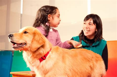 therapy dogs career procare therapy featuring industry news personal insights and immediate