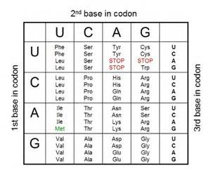 pics for gt rna codon