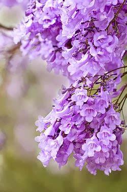 rosalba fiori il pianeta libro recensione all ombra dei fiori di