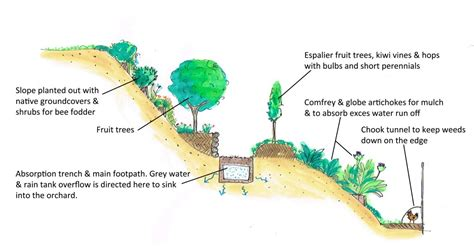 fruit tree orchard layout our orchard design development permaculture