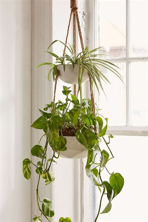 plant indoor best 25 hanging planters ideas on pinterest diy hanging planter diy hanging planter macrame