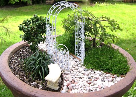 Wordless Wednesday Why Conifers Make Great Mini Garden Mini Garden Ideas
