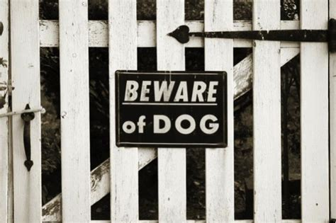 in your house beware of dog 11 tips to turn your home into a secure fortress