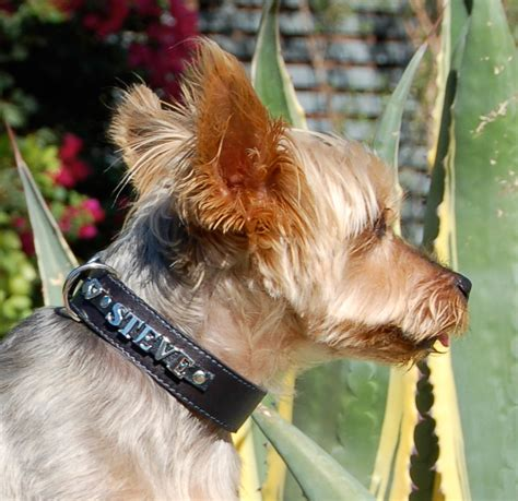 bark collar yorkie yorkie bark collars doggie bags