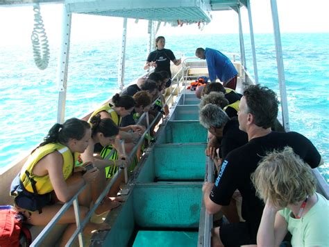 cairns glass bottom boat reef tours full day great barrier reef tour to upolu cay and reef