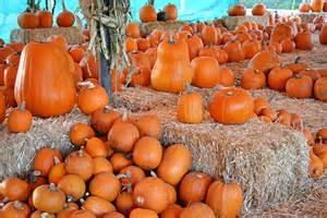 Pumpkin Patch Pumpkin Patch Sign Images