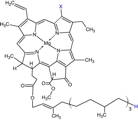 chlorophyll diagram the gallery for gt chlorophyll molecule structure