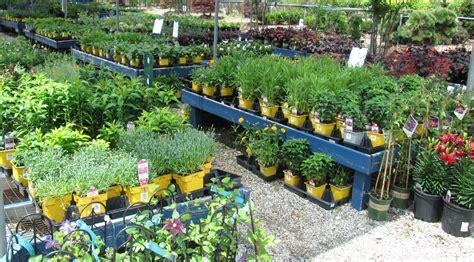 nomi fiori gialli fiori gialli nomi piante perenni nomi dei fiori gialli