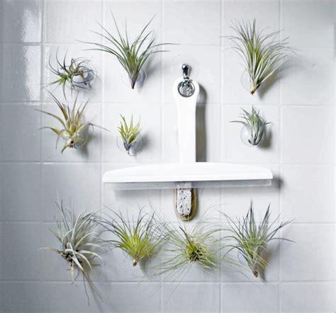 plants to keep in bathroom bathroom best plants bathroom images on pinterest ideas