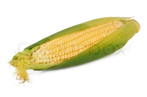 ripe ear of corn isolated on a white background stock