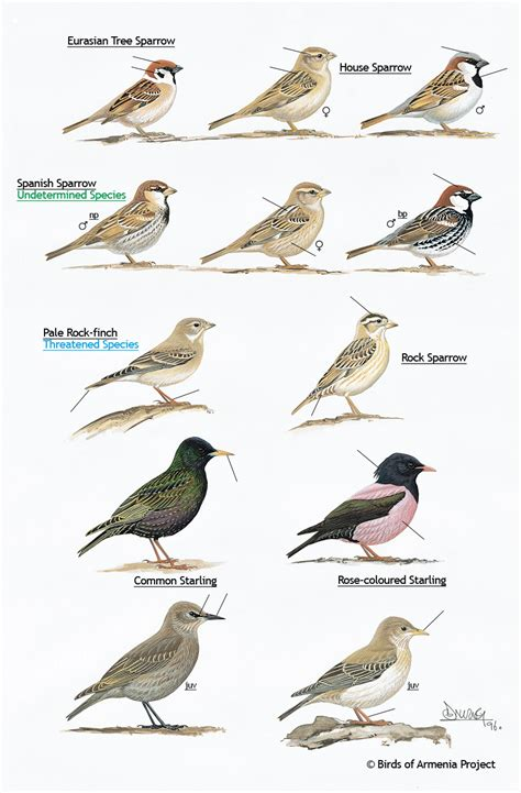 backyard bird identification 2017 2018 best cars reviews
