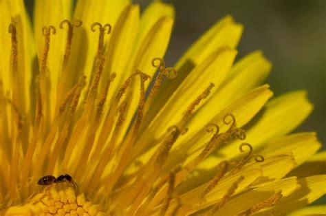 fiori di colore giallo colorare le pareti interne della tua casa di giallo