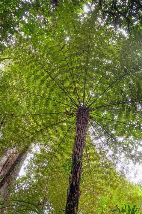 Pflanzen Und Bäume 2275 by 1387 Besten B 195 Ume Wurzeln Wald So Fantastisch Bilder Auf