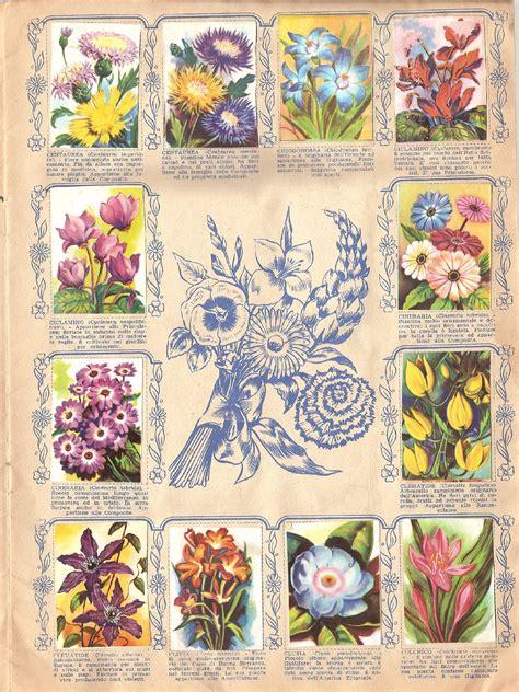 fiori in tutto il mondo fiori di tutto il mondo ed lo 1956