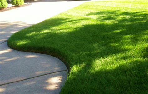 another reason i don t like lawn chemicals