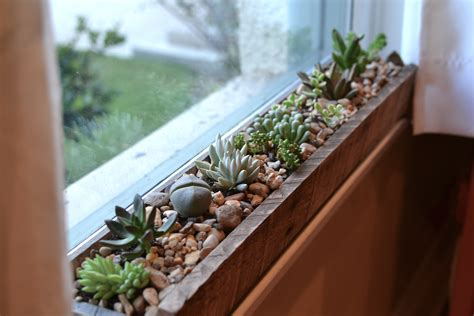 windowsill succulent garden little paths so startled