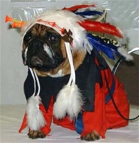 pug clothes india 17 best images about costumes on gladiator costumes costumes and