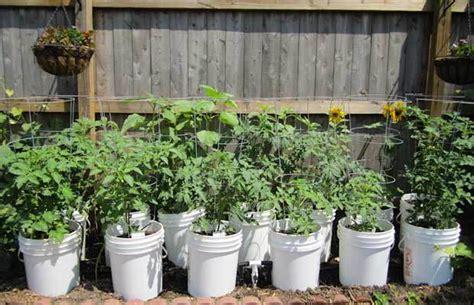 Top 5 Five Gallon Bucket Ideas The Prepper Dome 5 Gallon Vegetable Garden