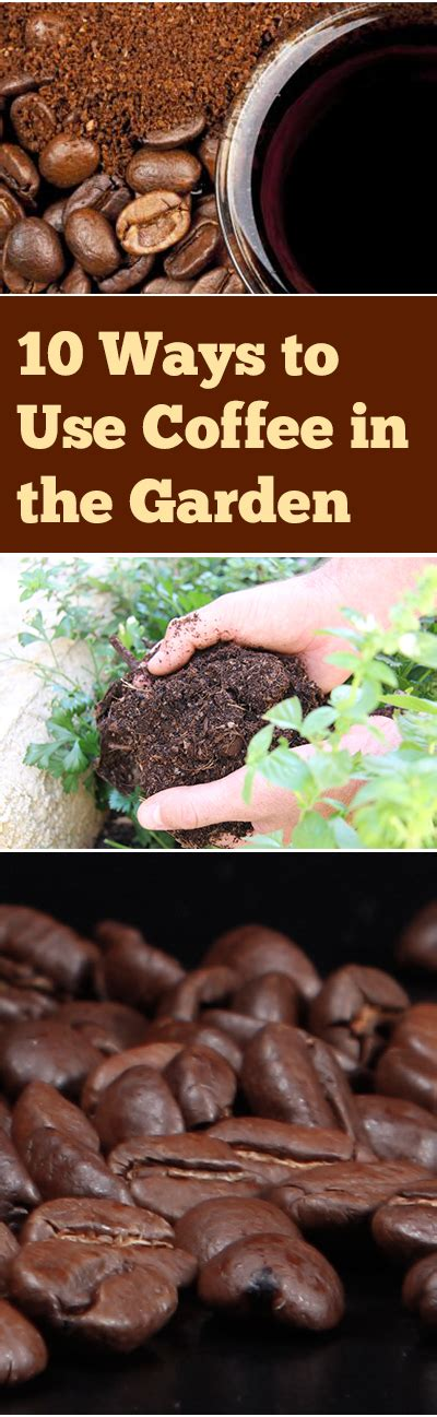 coffee grounds vegetable garden 10 ways you can improve your garden with coffee grounds