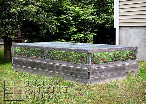 how to plant strawberries in a raised bed lessons learned with growing strawberries