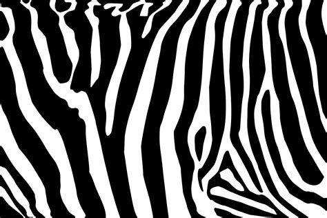 zebra pattern png motif zebra cliparts co