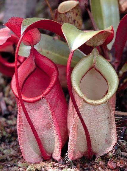 yang dilarang di indonesia 6 tumbuhan langka yang dilindungi di indonesia trial error