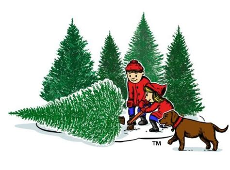 where to cut a x mas tree ri tree cutting new