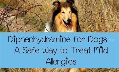 benadryl in dogs diphenhydramine for dogs a safe way to treat mild allergies dogvills
