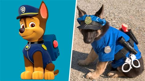 paw patrol puppy names pictures of paw patrol dogs wallpaper images