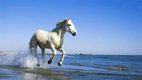 wallpaper horse free download beautiful horse hd wallpaper free download for desktop