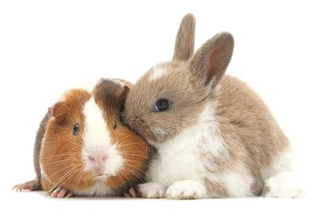 Put Your Chicken Or Rabbit Or Guinea Pig In An Omlet Omlet Eglu rabbits guinea pigs