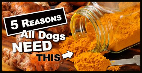 is turmeric for dogs turmeric for dogs doggies care