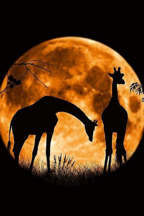 you seen a sunset before books best 25 sunset ideas on safari kenya