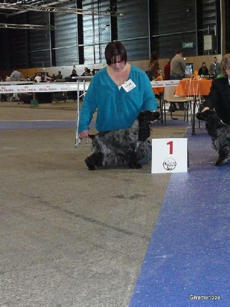 comfort racing tr 228 ff 2014 spoca chien elevage givemehope eleveur de chiens cocker