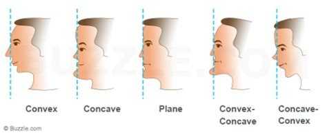 concave head shapes what your facial profile reveals about your personality