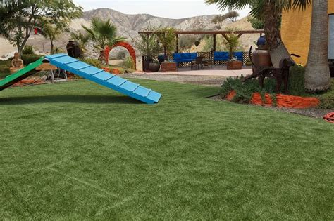 backyard agility course backyard agility course 266 best artificial turf lawnless