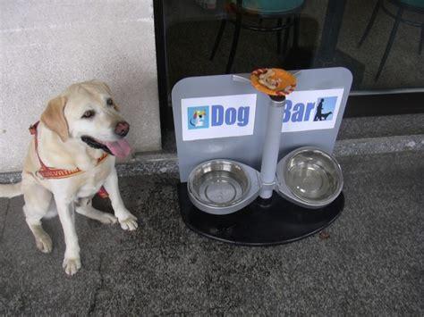 puppy bar foto busto arsizio nasce il bar con il punto di ristoro per i cani 1 di 7