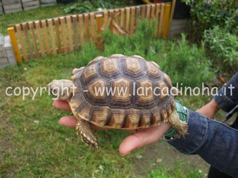 gabbia per tartarughe di terra tartarughe terrestri