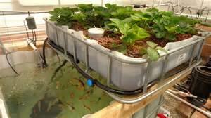 high crop production aquaponics grozinegrozine