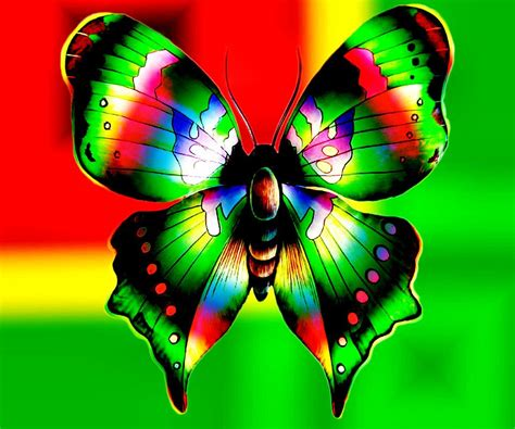 colorful butterflies colorful butterflies colorful butterfly abstract design