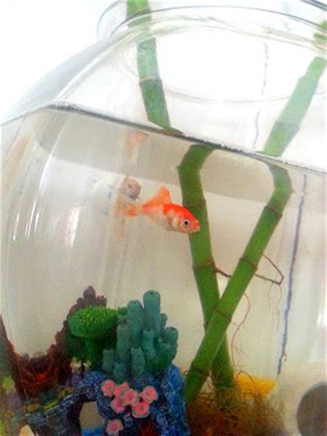Betta Fish In Vase With Bamboo by Betta Fish Goldfish And Bamboo Oh Crafts A La Mode