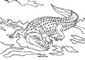 crocodile coloring page az coloring pages