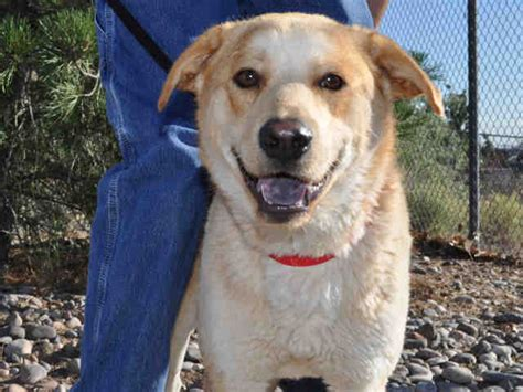 adopt a albuquerque pets for adoption albuquerque animal welfare department kob
