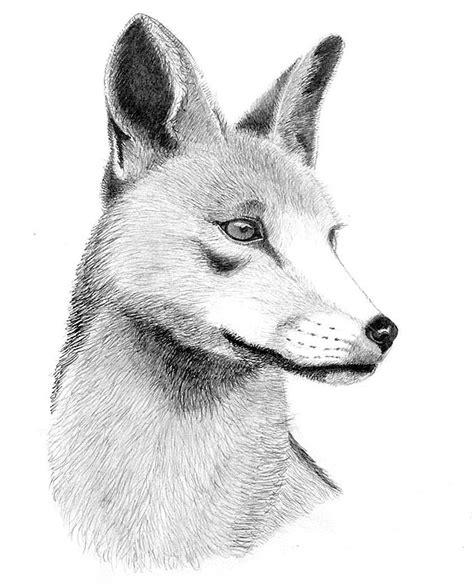 imagenes de zorros faciles para dibujar me presento con unos dibujos y acuarelas taringa