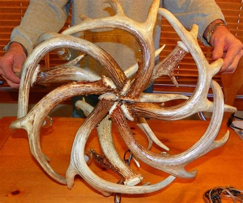 How To Make A Whitetail Deer Antler Chandelier Real Whitetail Deer Antler Chandelier Eclectic Chandeliers Other Metro By Belt Mountain