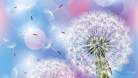 Qw Wallpaper Dandelion Pink dandelion fluff flowers nature background wallpapers on desktop nexus image 1101113
