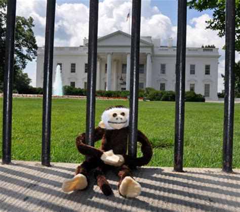 mocha house the mocha monkey tries to meet president obama the spectralight photography blog